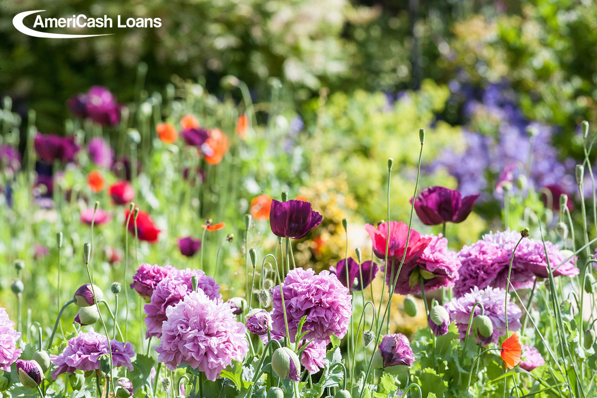 How to Plant a Garden and Keep Some Green